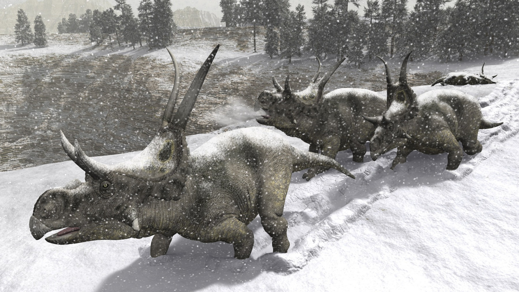 DIABLOCERATOPS IN THE SNOW