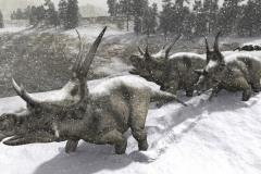 DIABLOCERATOPS IN THE SNOW