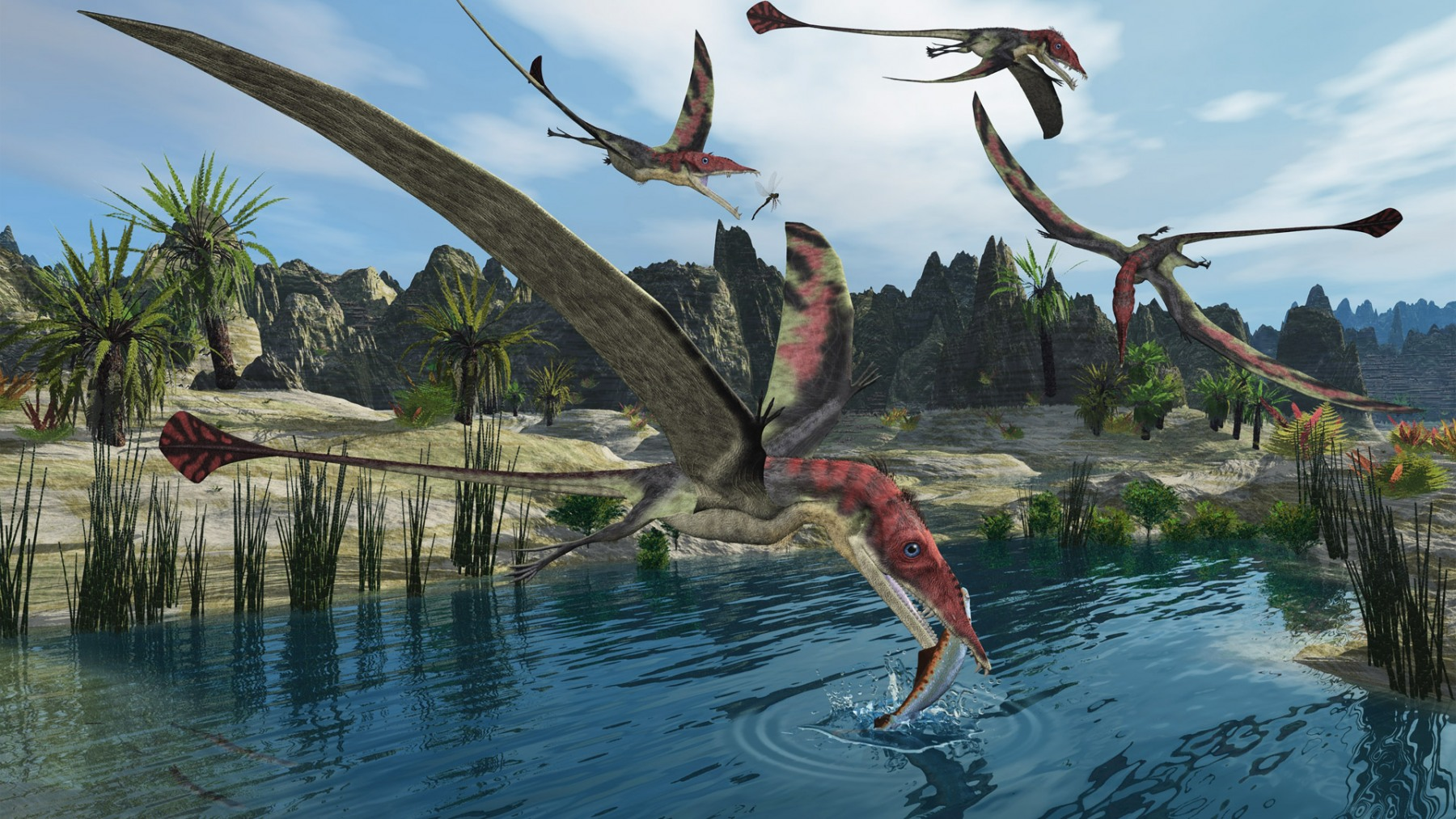 EUDIMORPHODON FEEDING