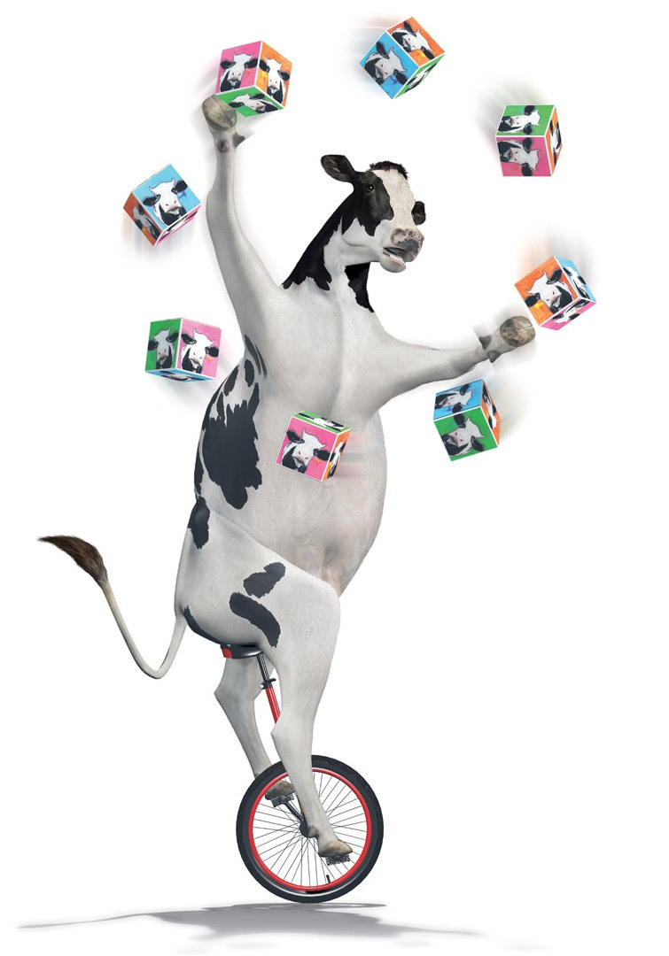 Cow Juggler