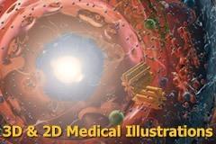 5_3DMedIllustrations