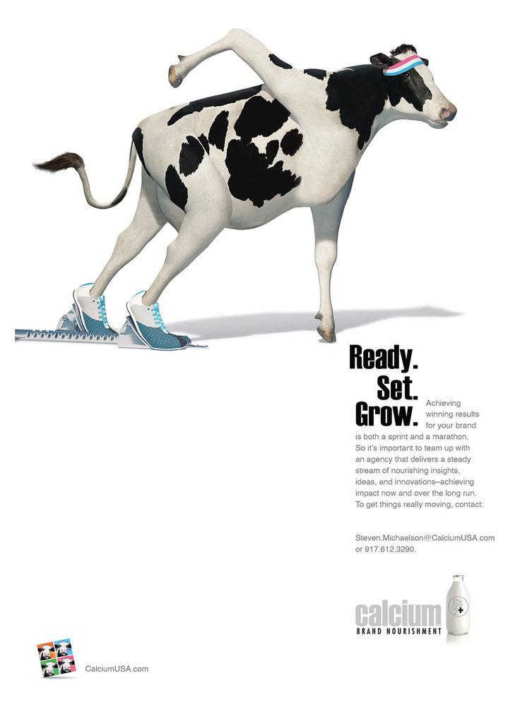 Runner Cow