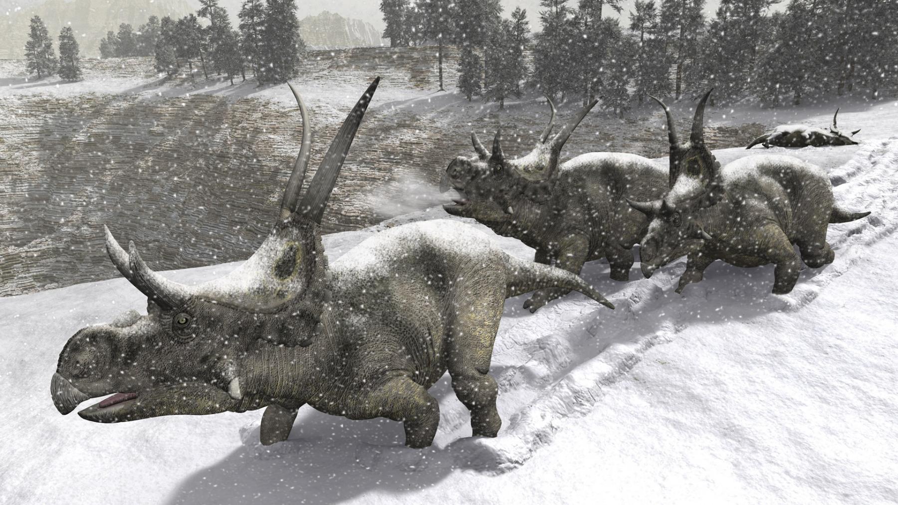 Diabloceratops in Snow