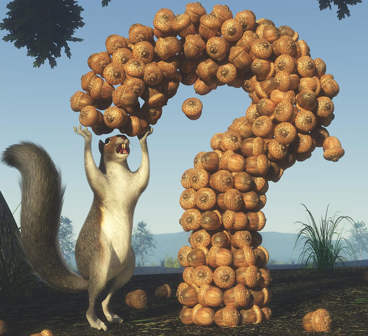 SquirrelAcornQMarkCU.jpg
