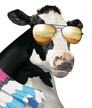 Beach-Cow-CU.jpg